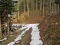 2018-01-28 (104) Forest road at Haltgraben, border area between Frankenfels at Kirchberg an der Pielach.jpg