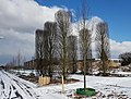 2018-Maastricht, Groene Loper in de sneeuw 19.jpg