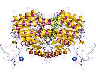 11β-Hydroxysteroid dehydrogenase enzyme