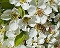 42 honey bee.jpg