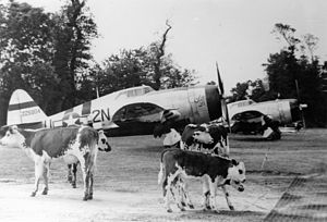 "Carentan Airfield - P-47 Thunderbolts, including (2N-U, serial number 42-25904) nicknamed ""Lethal Liz II"", of the 50th Fighter Group, with cows  at Carentan Airfield (A-10), France, Summer 1944"