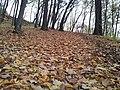 565 01 Choceň, Czech Republic - panoramio (46).jpg