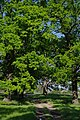 71-249-5007 Ruska Polana Oaks SAM 7590.jpg