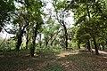 AJC Bose Indian Botanic Garden - Howrah 2018-04-01 2382.JPG