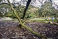 A Visit To the Botanic Gardens In Glasnevin (5469380709).jpg