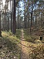 A beautiful path in the Teutoburg Forest.jpg