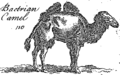 A new and accurate system of natural history; containing I Fleuron T131870-33.png