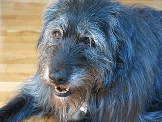 Shaggy dog story - A shaggy dog, the archetypical subject of long-winded, pointless stories