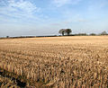 A stubble field - geograph.org.uk - 1140992.jpg