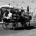 A touristic sightseeing horse-drawn cart (32688140337).jpg