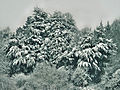 A winter walk, Merstham (6835660063).jpg