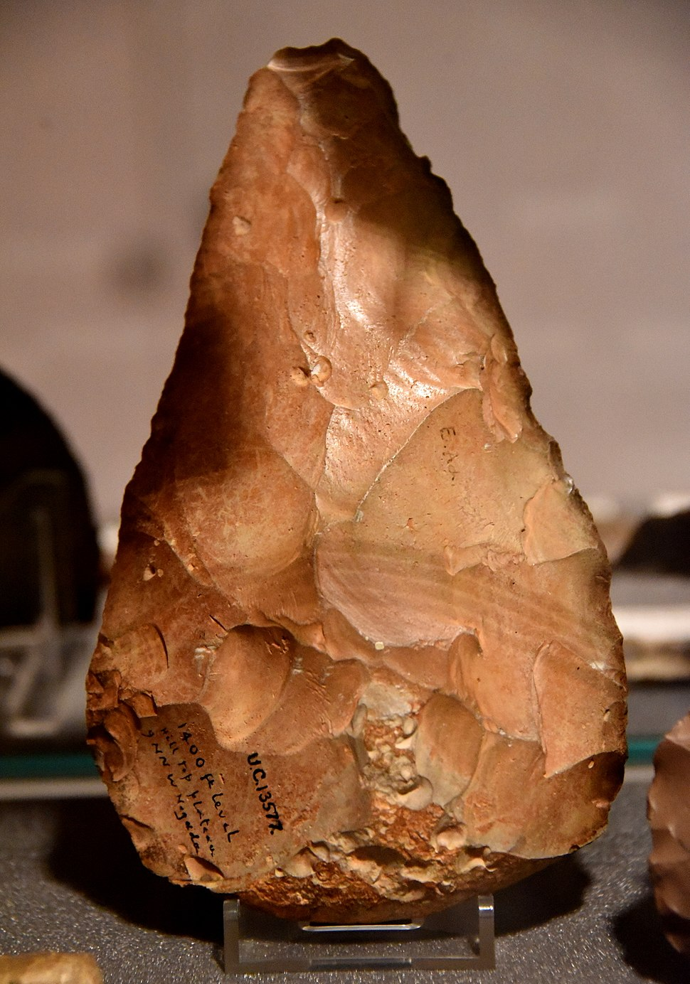 Acheulean hand-axe from Egypt. Found on a hill top plateau, 1400 feet above sea level, 9 miles NNW of the city of Naqada, Egypt. Paleolithic. The Petrie Museum of Egyptian Archaeology, London