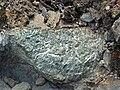 Actinolite xenolith in sandorite lamprophyre (Sandor Dike, Neoarchean, 2.703 Ga; Route 17 roadcut northeast of Wasp Lake & north of Wawa, Ontario, Canada) 10 (48342712757).jpg
