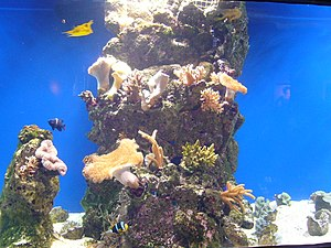 English: Acuario 5 in Sala Humboldt of Aquariu...