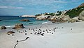 African penguins (Spheniscus demersus) at Boulders Beach (04).jpg