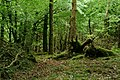 Afternoon in the Wood (42705539762).jpg