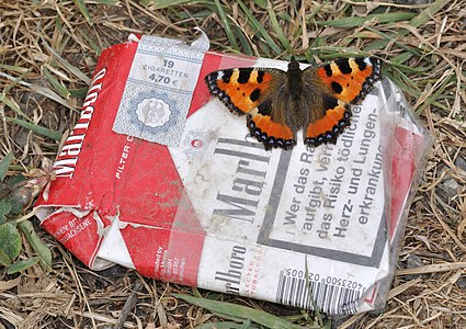 Small Tortoiseshell on a package of Marlboro cigarettes