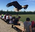 Aguila calva entre publico recortada reducida.jpg