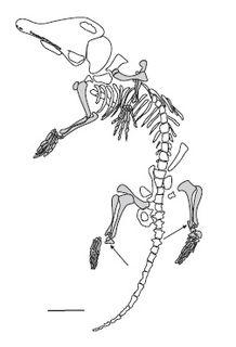 <i>Akidolestes</i> extinct genus of mammals