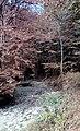 Alangdarreh Forest 2.jpg