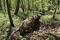 Allacher-Forst Muenchen-10.jpg