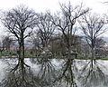 Allegheny Cemetery Pond, 2015-04-09, 03.jpg