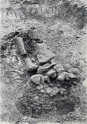 Giraffatitan - Limb bones during excavation in Tendaguru