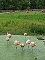 Amazona Zoo.JPG