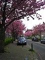 Amsterdam Noord 04 2014 - panoramio (12).jpg