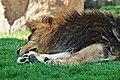 Animales bioparc-valencia-2012 (3).JPG