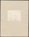 Anoplotherium spec. - 1700-1880 - Print - Iconographia Zoologica - Special Collections University of Amsterdam - UBA01 IZ22000255.tif