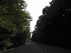 aokigahara wikipedia la enciclopedia libre