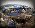 Aother lizard1b (8305312577).jpg