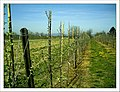 April Apple Frühling Denzlingen - Master Seasons Rhine Valley 2013 - panoramio (1).jpg
