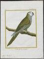 Ara manilata - 1700-1880 - Print - Iconographia Zoologica - Special Collections University of Amsterdam - UBA01 IZ18500099.tif