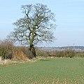 Arable land near Lower Beobridge, Shropshire - geograph.org.uk - 1766057.jpg