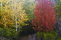 Arboles Rojos y Amarillos - panoramio.jpg