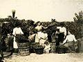 Archivo General de la Nación Argentina 1890 aprox Mendoza, trabajadoras rurales en viñedo.jpg
