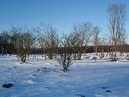 Stubbskottænger vintertid.