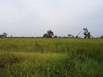Kaziranga National Park - Grassland of Kaziranga National Park