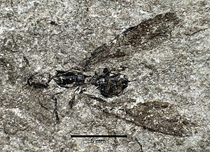1849 in paleontology - Attopsis longipennis