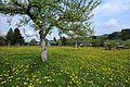 Auf der Krokuswiese in Drebach im Mai 2017..2H1A3070WI.jpg