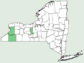 Aureolaria flava var macrantha NY-dist-map.png