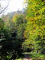 Autum Trees Black Mountain Campground Pisgah Nat Forest NC 4323 (26172155859).jpg