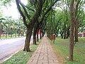 Avenida da Universidade, CUASO 2.JPG