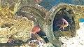Béziers - Aquarium Polygone 06.jpg