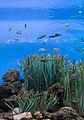 BCN Aquarium.jpg