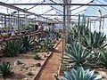 BCSS gloucester branch auction - The national agave collection (6207541590).jpg