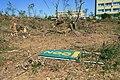Bažantnice (Hodonín) after tornado strike 2021-07-10 1790.jpg
