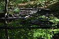 Baden-Württemberg, Schorndorf, Naturdenkmal FND 81190670056 13.jpg